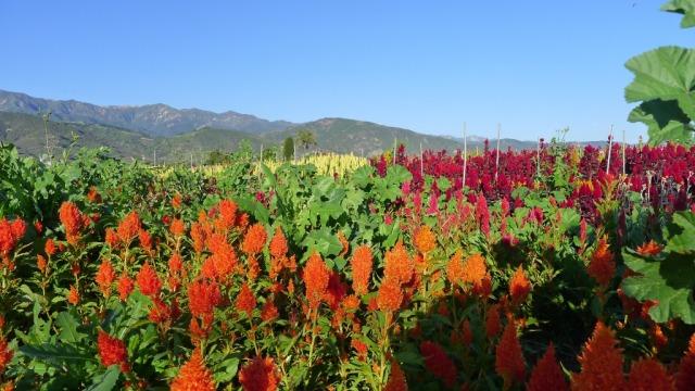 Fall flowers courtesy of Slim Paley blog