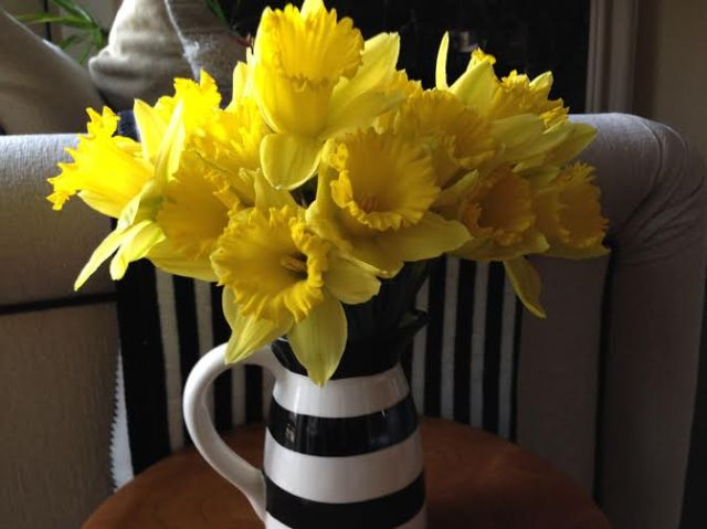 design flowers daffodils in black and white striped vase