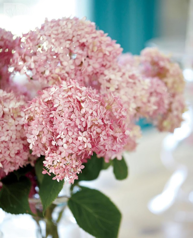pink-hydrangeas-from-stacy-mclennan-interiors-via-house-of-turquoise-jsut-pretty-picture