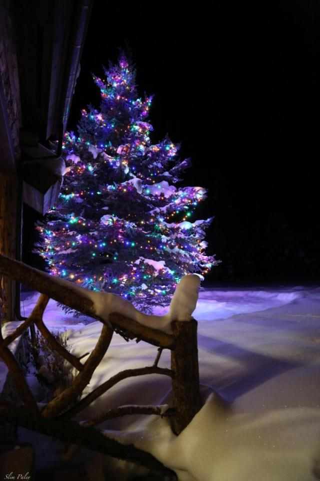 christmas-tree-in-snow-from-slim-paley