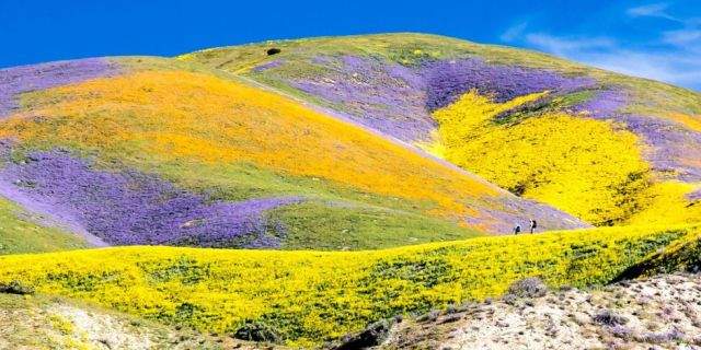 california super bloom from country living facwbook