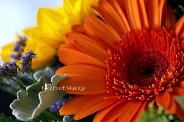design sunflower and orange gerbera from back porch musings