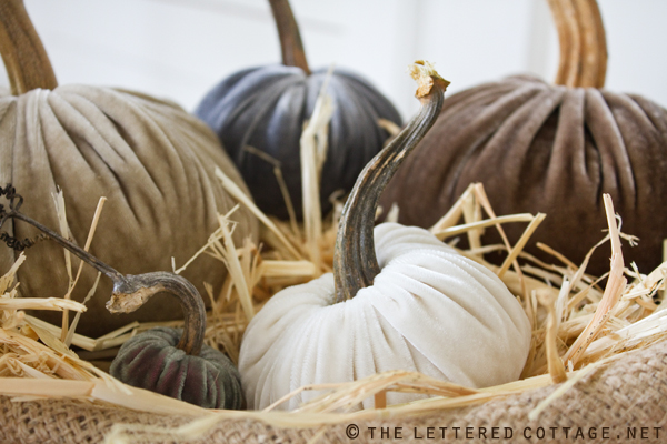 pumpkins with real stems from love feast table